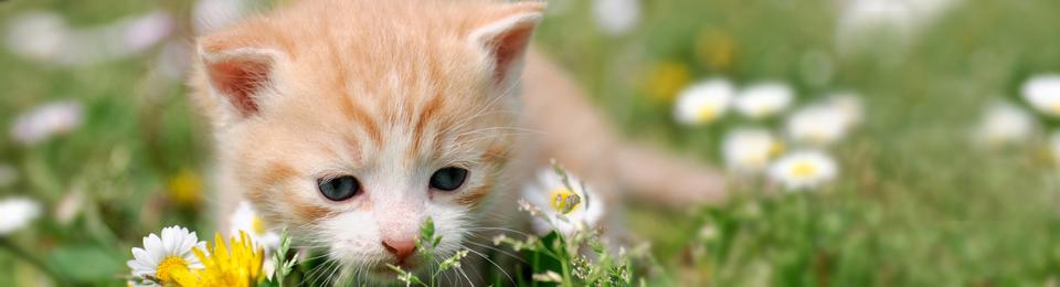 General Image - Kitten in Field Right